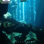 BradsDomain Mobile App